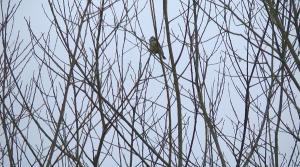 Humberhead Spring2